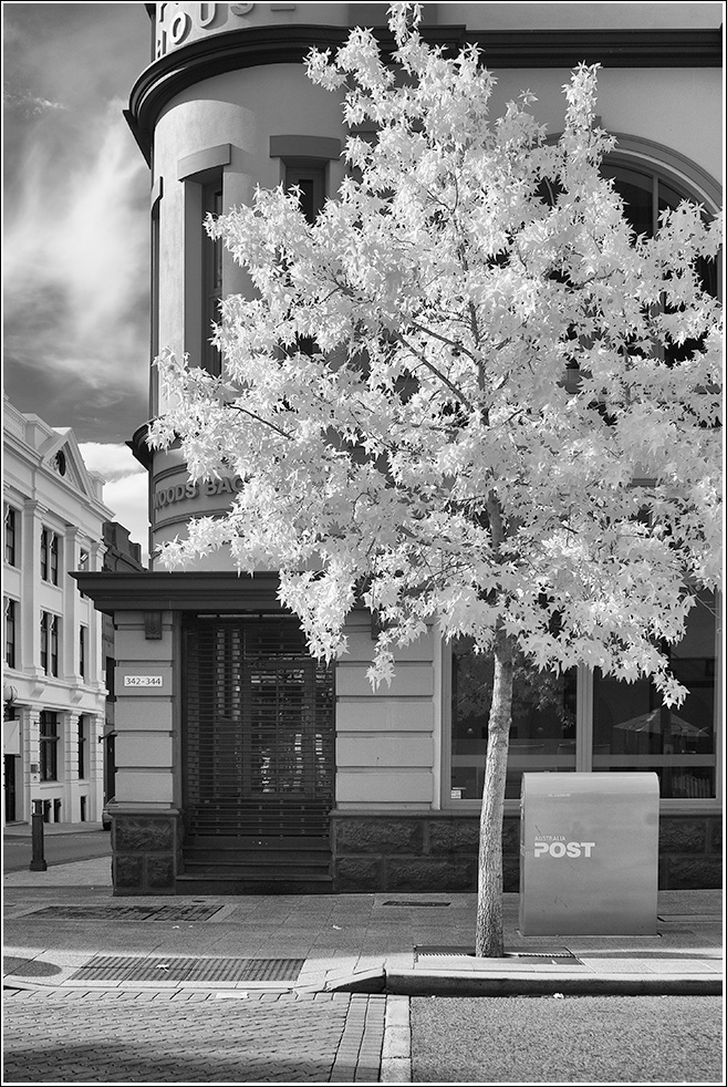 Plane Tree with postbox in Perth