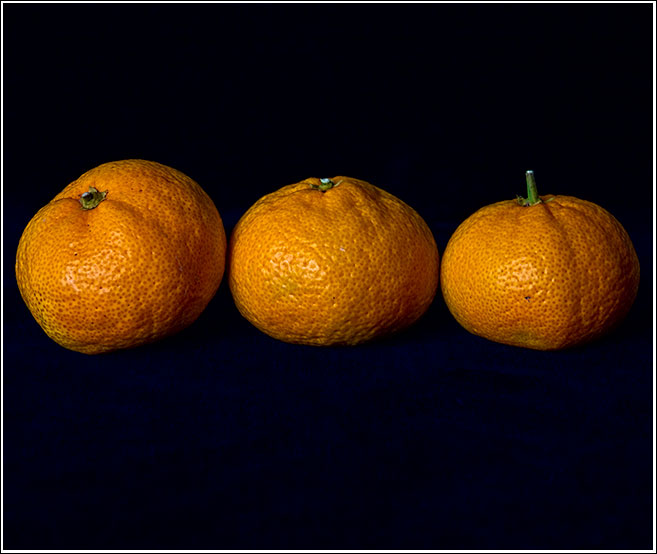 For the love of three oranges