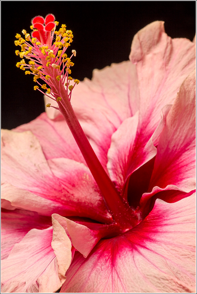 Hibiscus Shot on an M with a 35year old lens