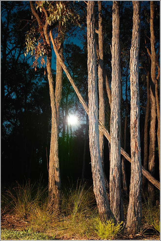 Full moon in the Jarrah forest