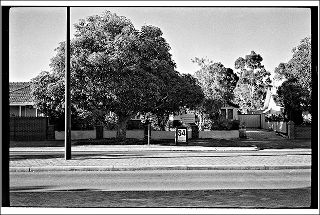 Four Dollars : street tree series continued...