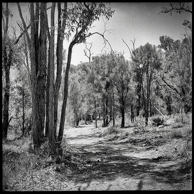 Towards Mundaring at midday Mad dogs and Englishman go out in the midday sun...
