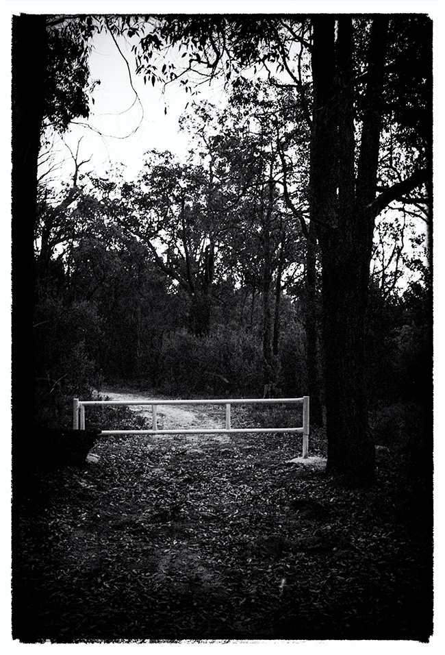 Almost night on the Jarrah forest walk track