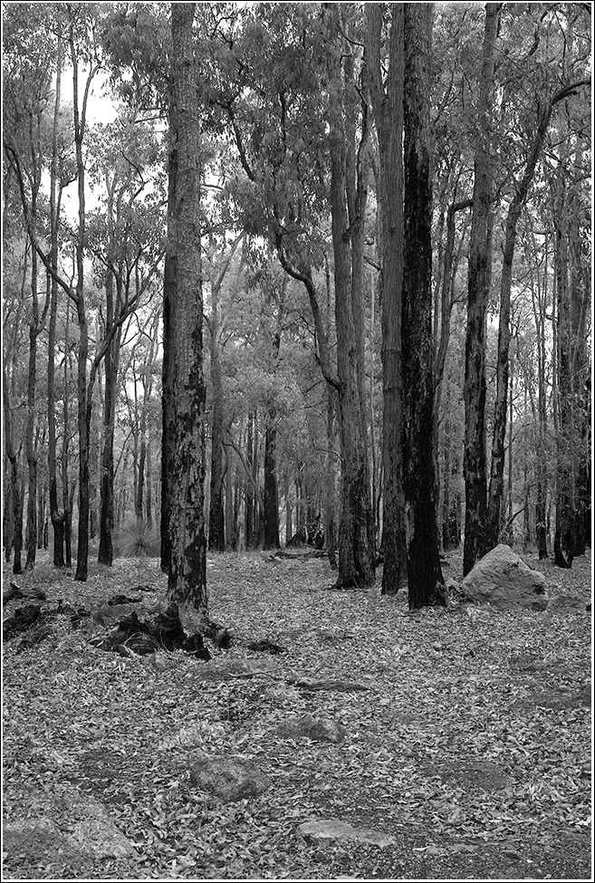 A path to a clearing in the Jarrah forest