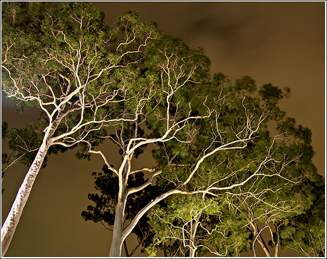 Ghostgums at night