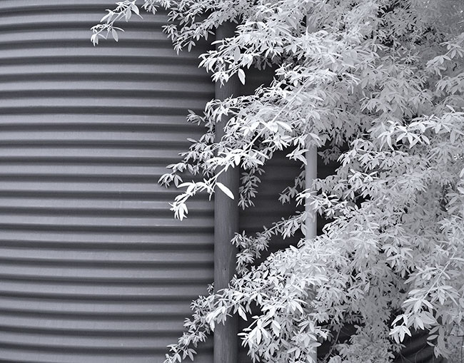 Our water tank with a tagasaste tree infrared 590nm