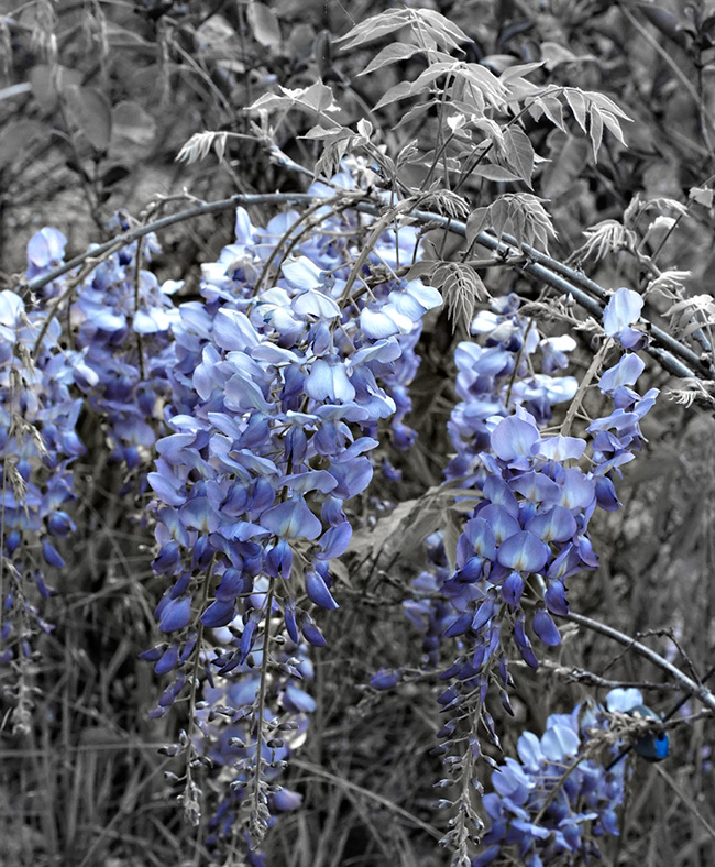 Its spring the blues always the blues...