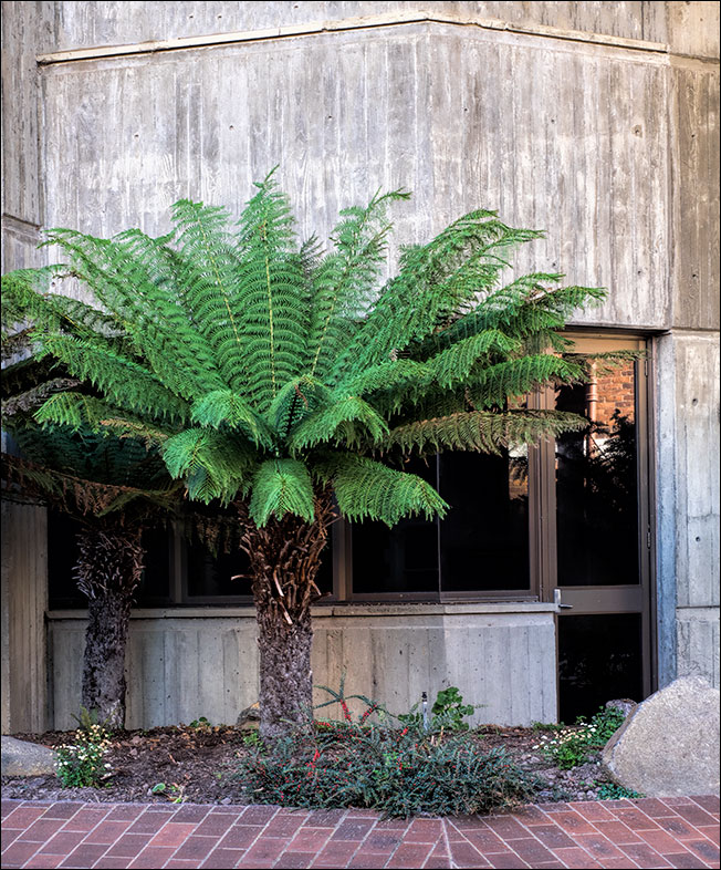 Tree ferns and brutalism Henty House in Launceston Tasmania